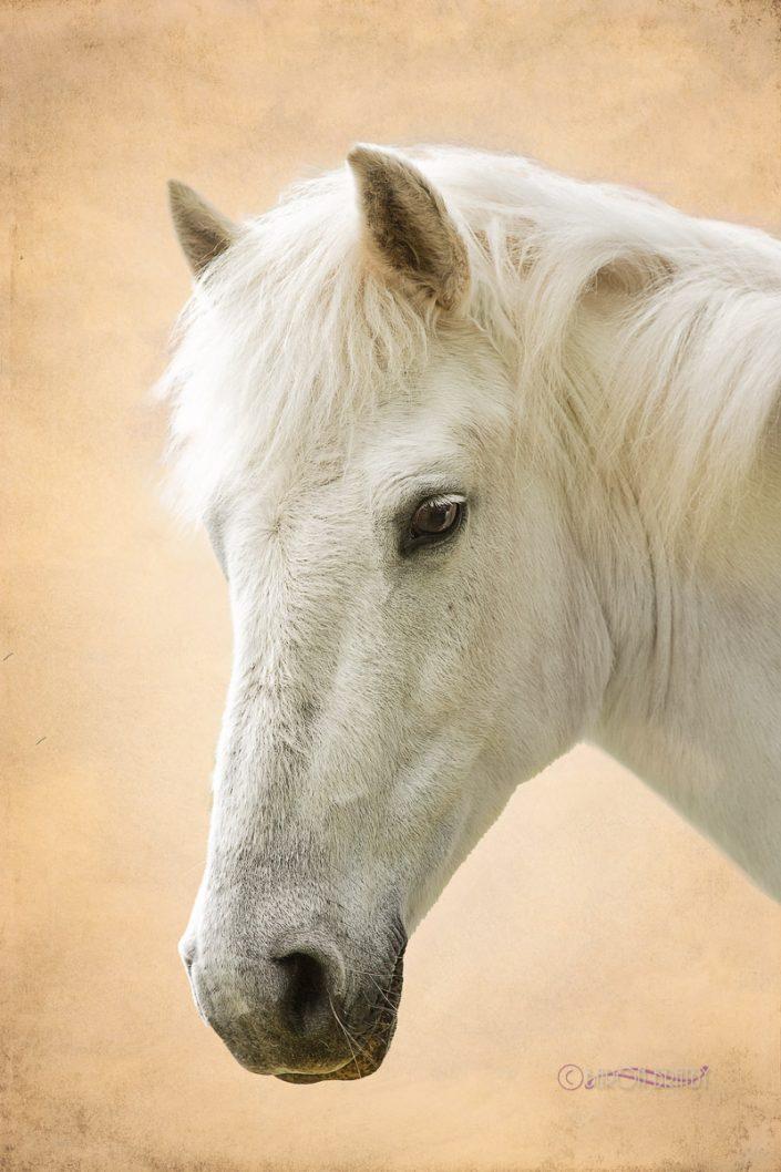 White horse location portrait set agains brown background
