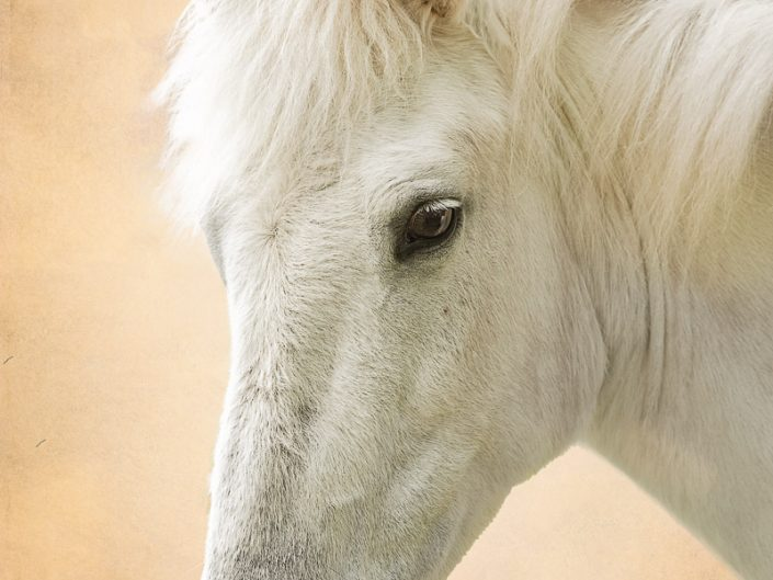 White horse location portrait set agains brown background