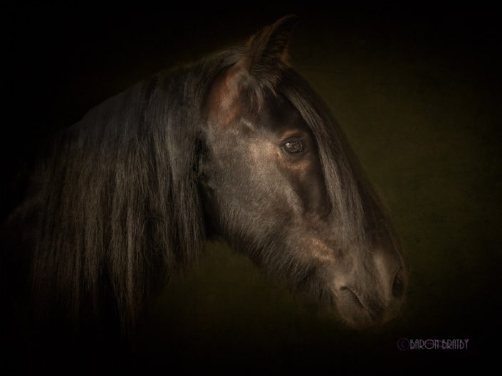 Brown fine art location ortrait of horse against dark background