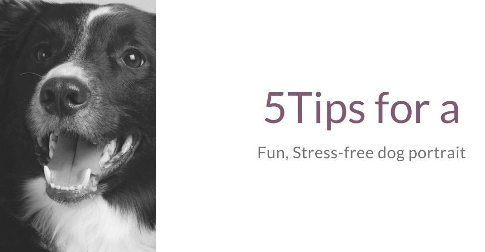 5 Tips for a fun stress-free dog portrait